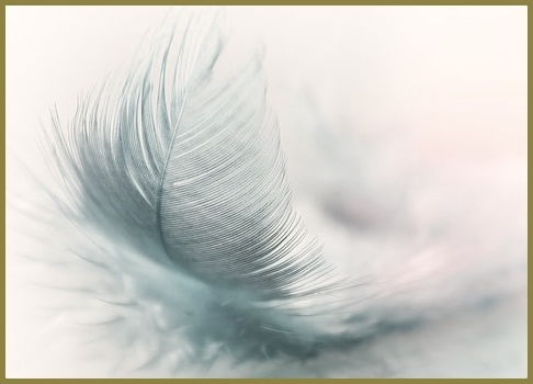 feather-3010848
