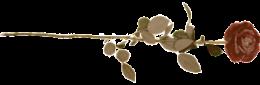 rose-stem1